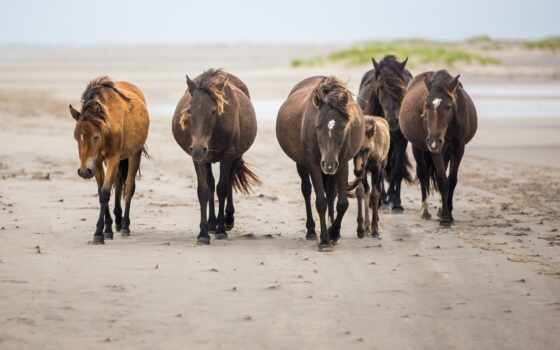 животные, лошади, кони