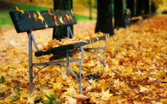 осень, листья, флот