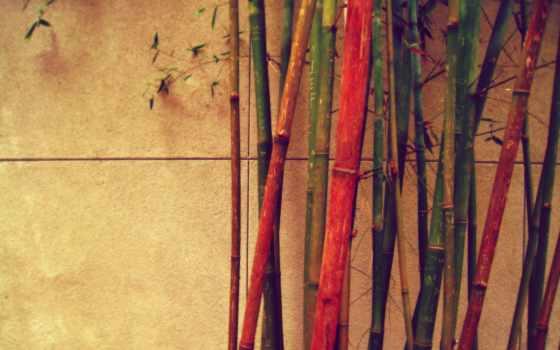 бамбук, different, стена, яркие, color, дерево, широкоформатные, веревка,