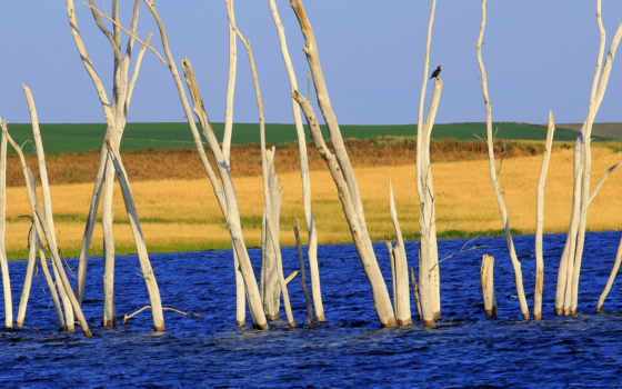 природа, water, птица, trees, небо, река, заставки, tapety, лес, ветки, фотографий,