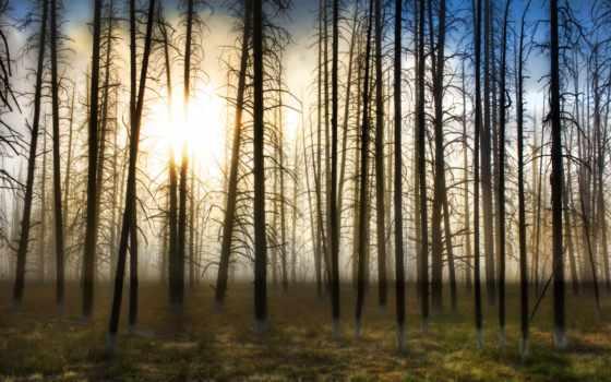 весна, ранняя, лесу,