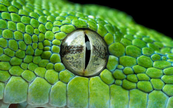 глаз, snake, vind, henrik, closeup, wavemotions, eyes, more,