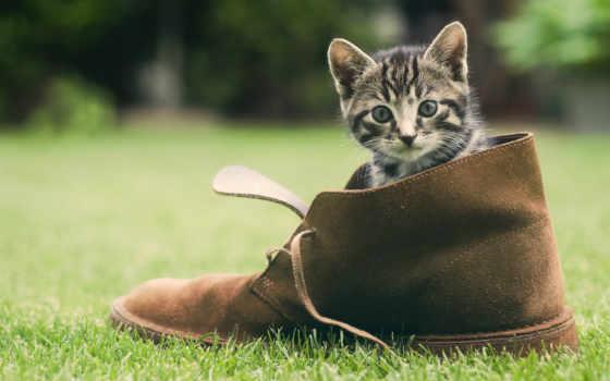 котенок, кот, трава, взгляд, зелёный, шерсть, котят, под, свет,