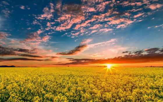 весна, природа, поле, закат, рапс, небо, oblaka, sun, дерево, trees, со,