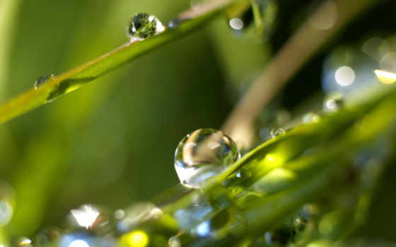 росы, капли, роса, них, waters, траве, трава, целебные, свойства, яndex,