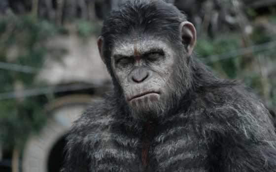 planet, apes, обезьяна, стать