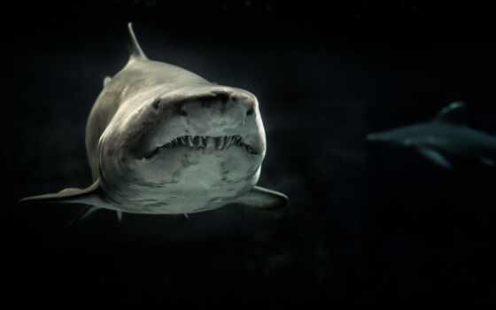 акула, темное, вода,