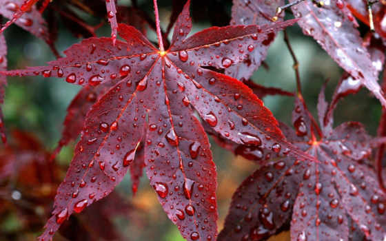 осень, природа