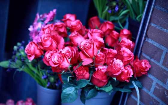 цветы, розы, стена