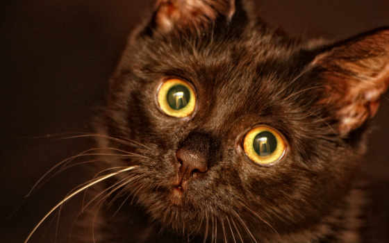 котенок, black, разрешениях