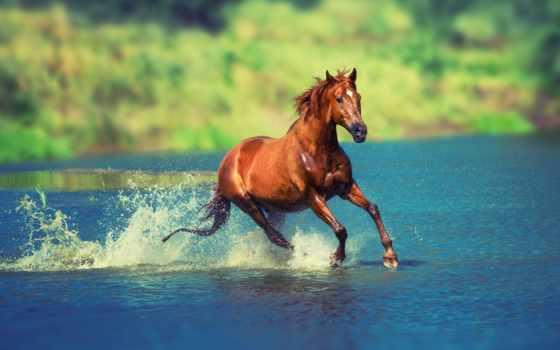 лошадь скачет по воде
