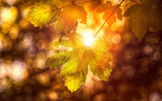 осень, природа, осенние, картинка, this, листва, лист, растянувшийся, золотистый, fone, trees,