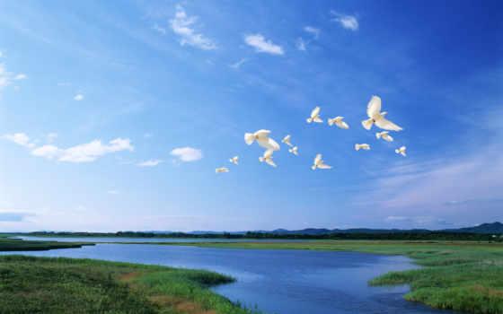 palomas, volando, fotos, blancas, para, paloma, paz, imagenes, бланки,