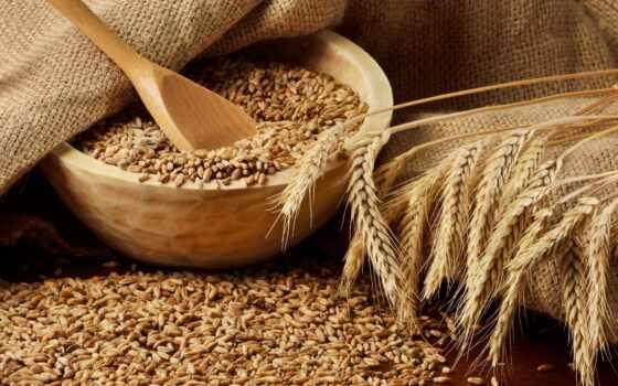 пшеница, серьги, seed, соцветие, straight, трудно, structure