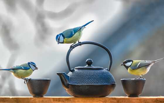 птица, tit, circle, animal, чайник, три, titmouse, трио, vtroi, лист, природа