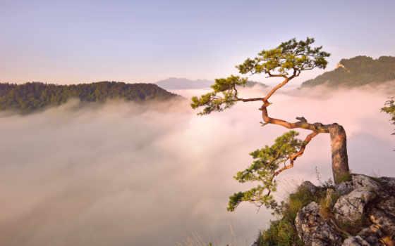 обои, туман, горы, природа, утро, рассвет, дерево,