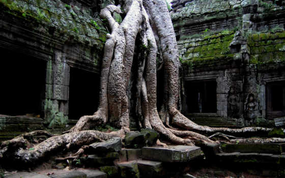 temple, корни, руины, background, cambodia, angkor, desktop, free, древний, download, дерево, строение, buddha, prohm, nature, wat, widescreen,
