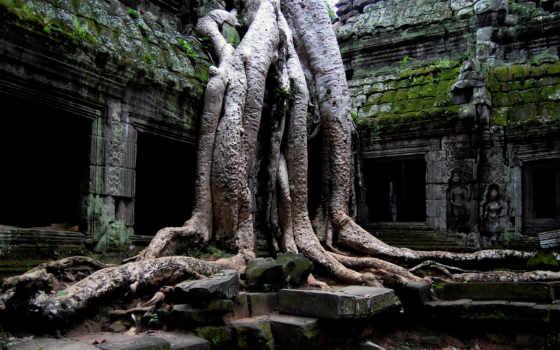 temple, корни