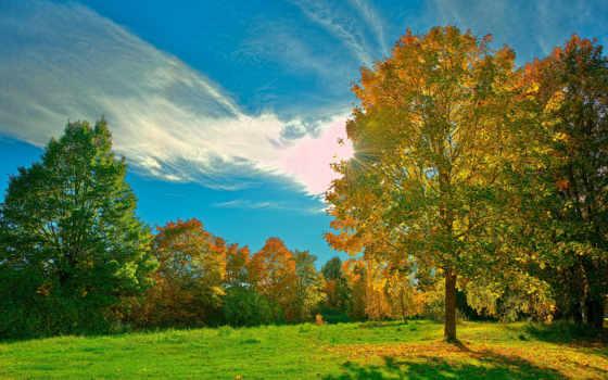 деревья, трава