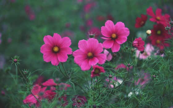 цветы, красивые, природа