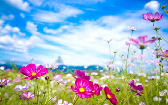 summer, цветы, природа,