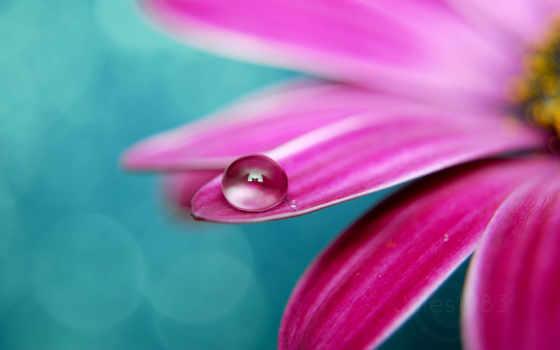 water, цветы, drops Фон № 113900 разрешение 2560x1600