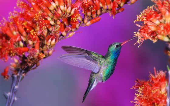 колибри, птица, волна, полет,