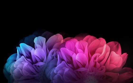 цветы, радуга, текстуры