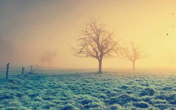 trees, голые, утра, дымке, зимнего, дымка, туман, sun, рассвет, приколы, стена,