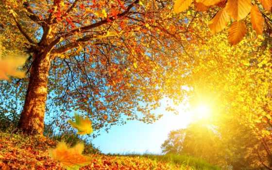 природа, goodfon, trees, су, листья, sign, yellow, лес,