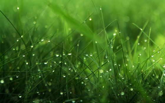 зелёный, трава, роса, капли, макро,