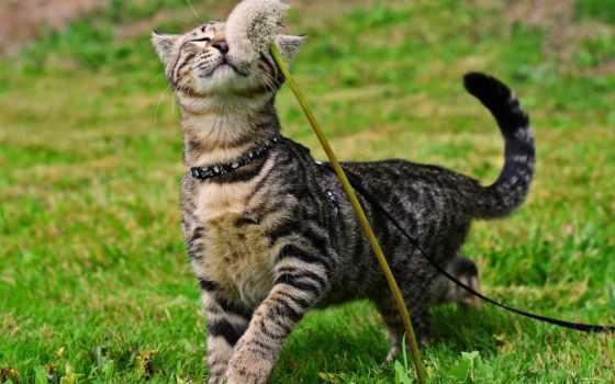 кот, cats, одуванчик