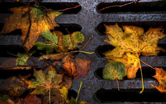 осень, природа, листва, удивительная, ощущение, часть,