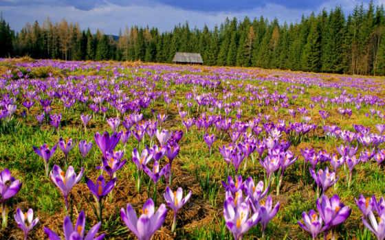 весенняя, картинка, поляна, природа, весна, цветов, картинку, разрешений, higher, таблице, одно,