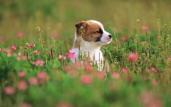 щенок, сидит, траве, happy, birthday, сохраняется, заставка, nice,