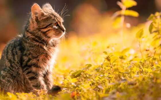 погода, кот, ан, ukraine, outdoor, tuesday, серый, латвийский, warm