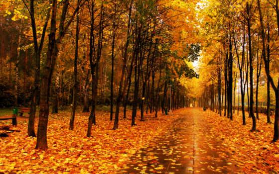осень, park, аллея, trees, трек, скамейки, листопад, плитка,