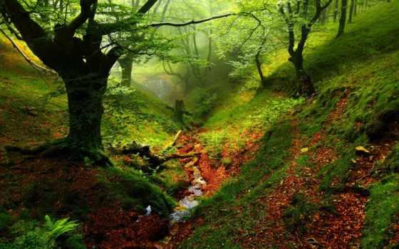 лес, овраг, река, trees, природа, ручей, дерево, мох, сосны, красивые, summer,