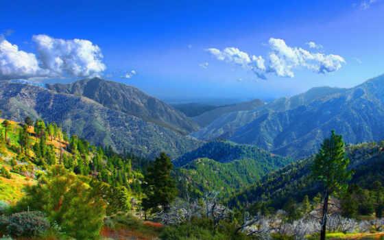 гора, wilderness, sheep, зелёный, дневной