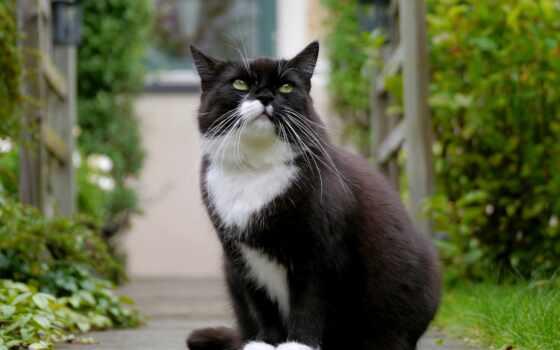 black, white, глаз, кот, взгляд, зеленое, окрас, леопард, красивый, color
