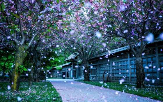 смена, настроение, цветок, priroda, японія, листь, цветочный, melkii, красивый, razmyt, поляна