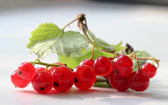 смородина, еда, фрукты