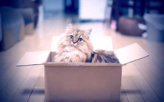 кот, коробке, котенок