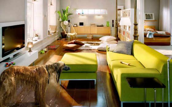диван, зеленые, собака
