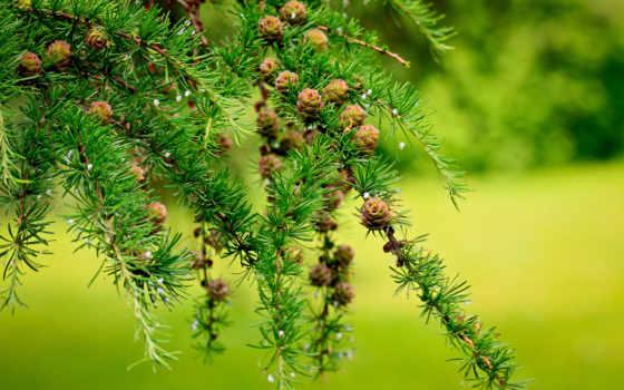 природа, широкоформатные, деревя