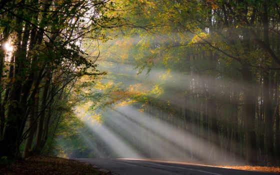 дорога, лучи солнца