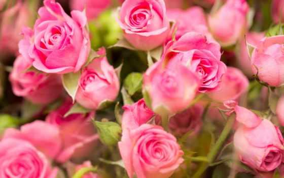 цветы, коллекция, fresh