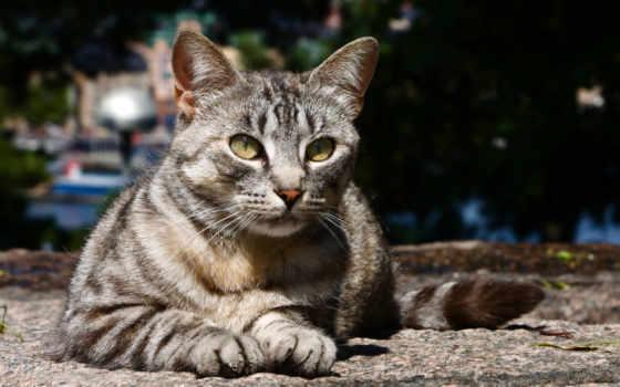 stray, кот, cats