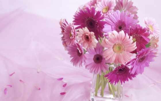 gerbera, daisy, daisies