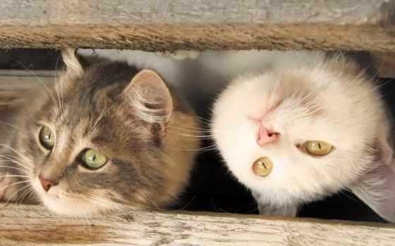 тебя, киска, люблю, рамочка, кошка, главное, кот, children, you,